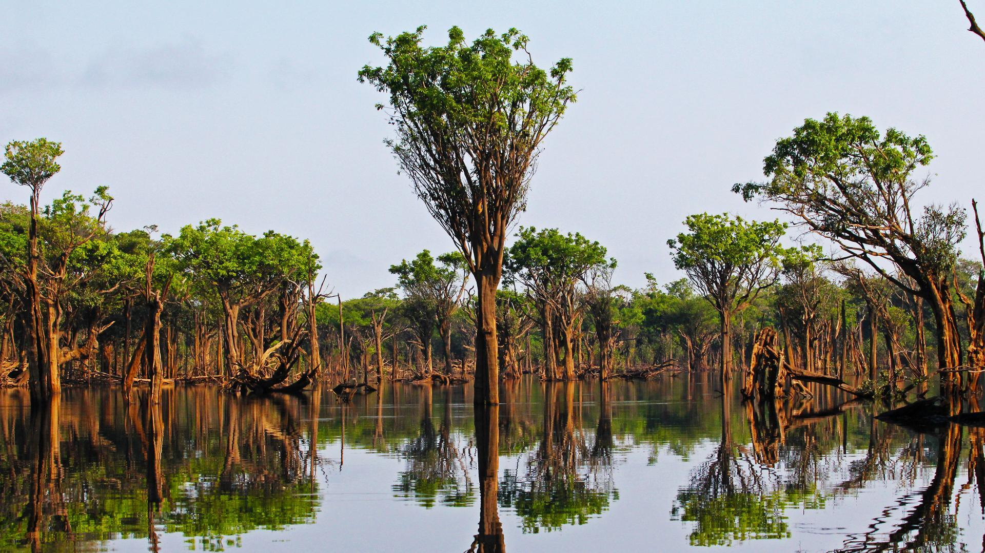 Landscape in the Amazon Rainforest