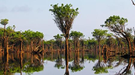 Landscape in the Amazon Rainforest