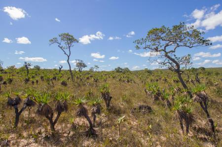 Typical Cerrado landscape