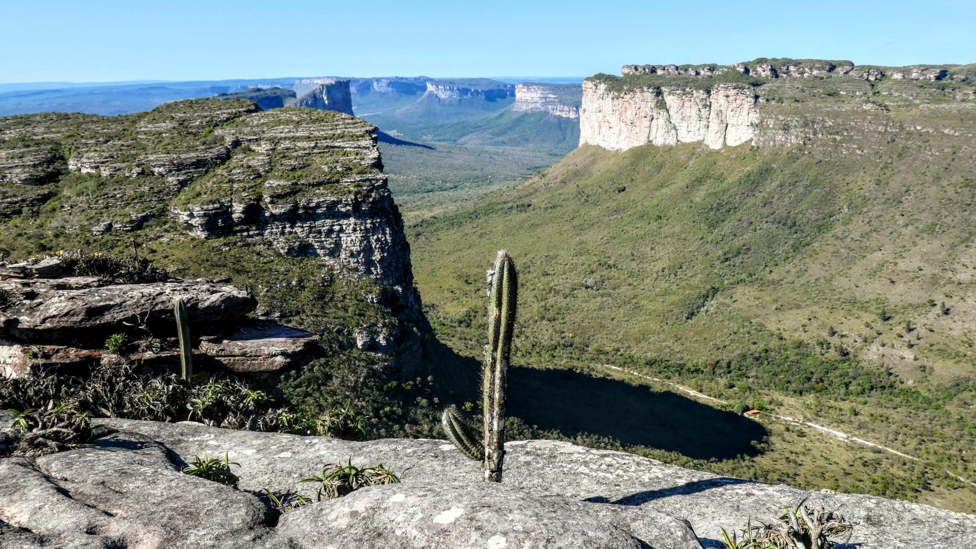 Cacti: Endemic plants in Brazil