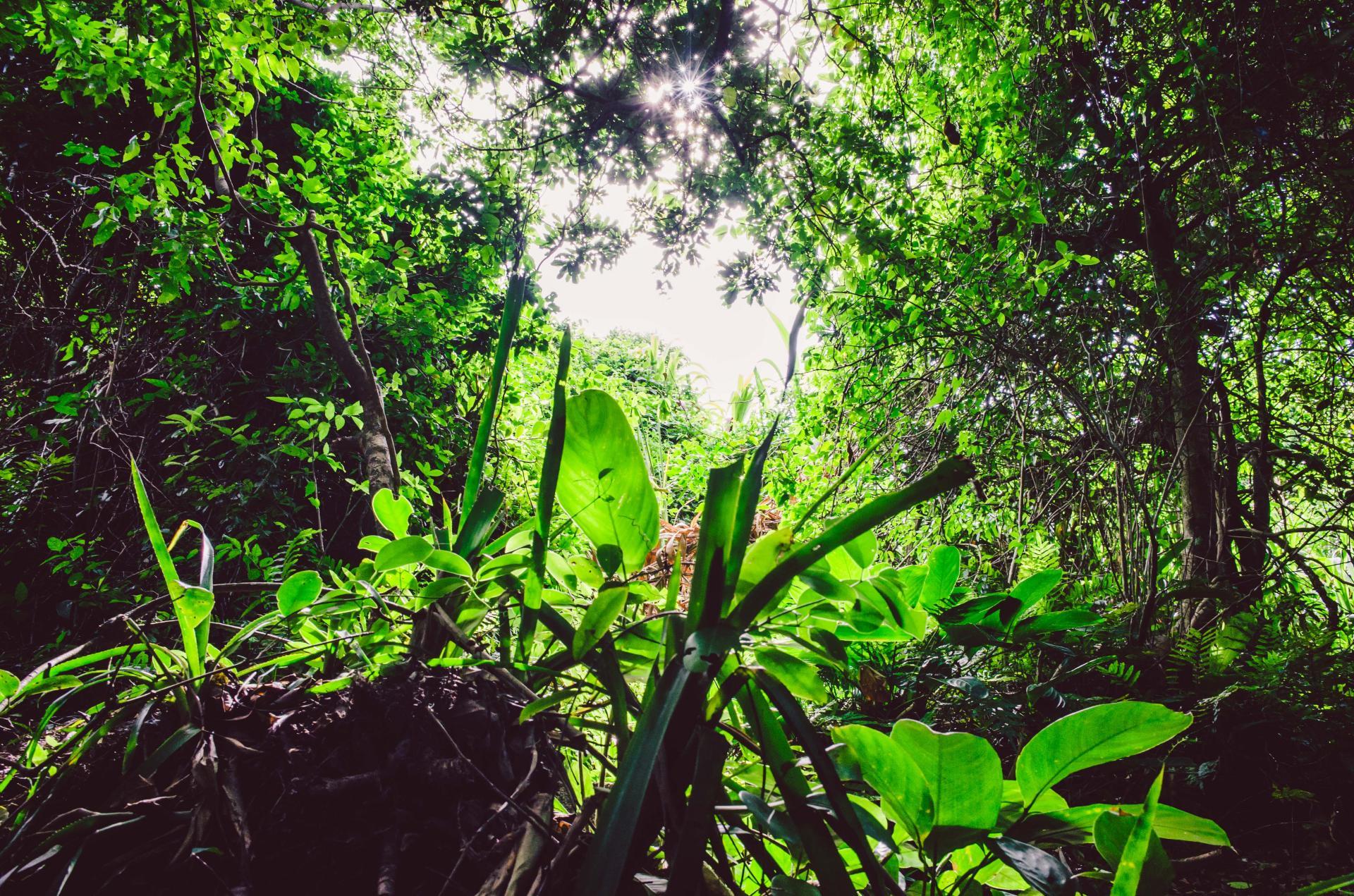 Atlantic Rainforest in Florianopolis