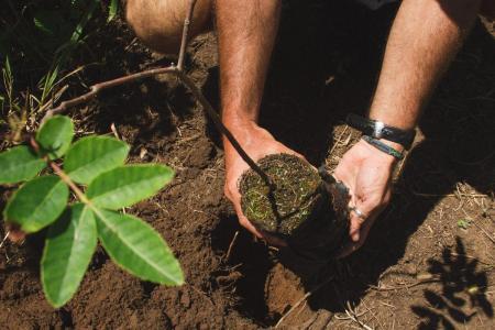 Salve Floripa protects the Atlantic Rainforest in Florianopolis