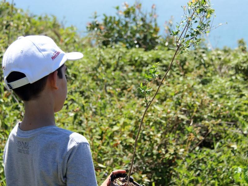A boy plants a tree on the island of Florianopolis in Brazil