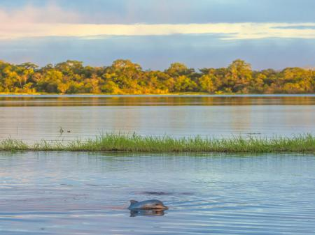Dolphin spotting in the Amazon