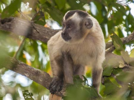 Pousada Piuval Wildlife