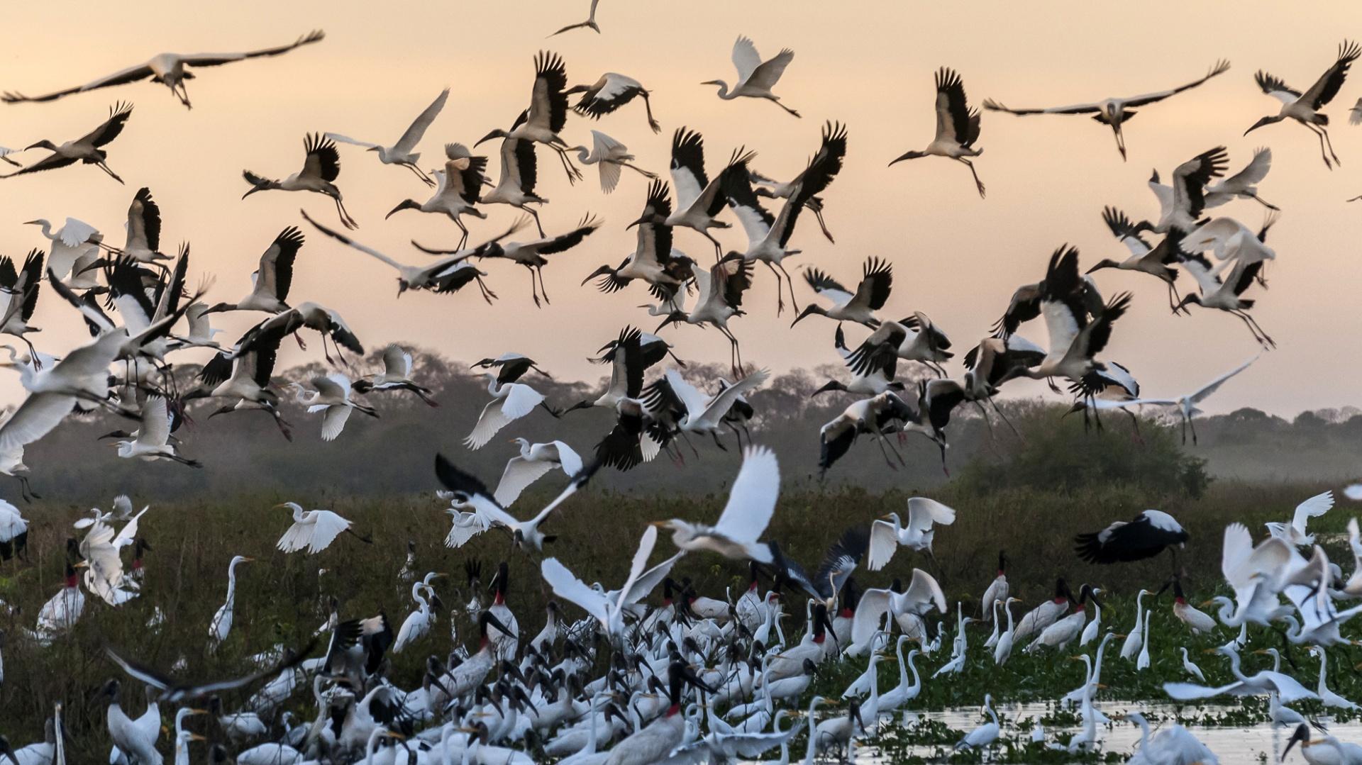 Birds North Pantanal