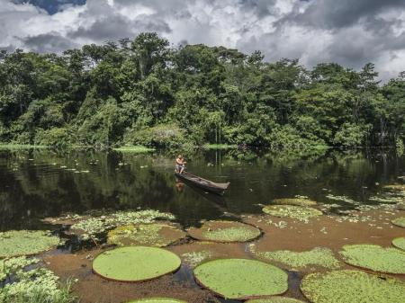 Nature in the Amazon