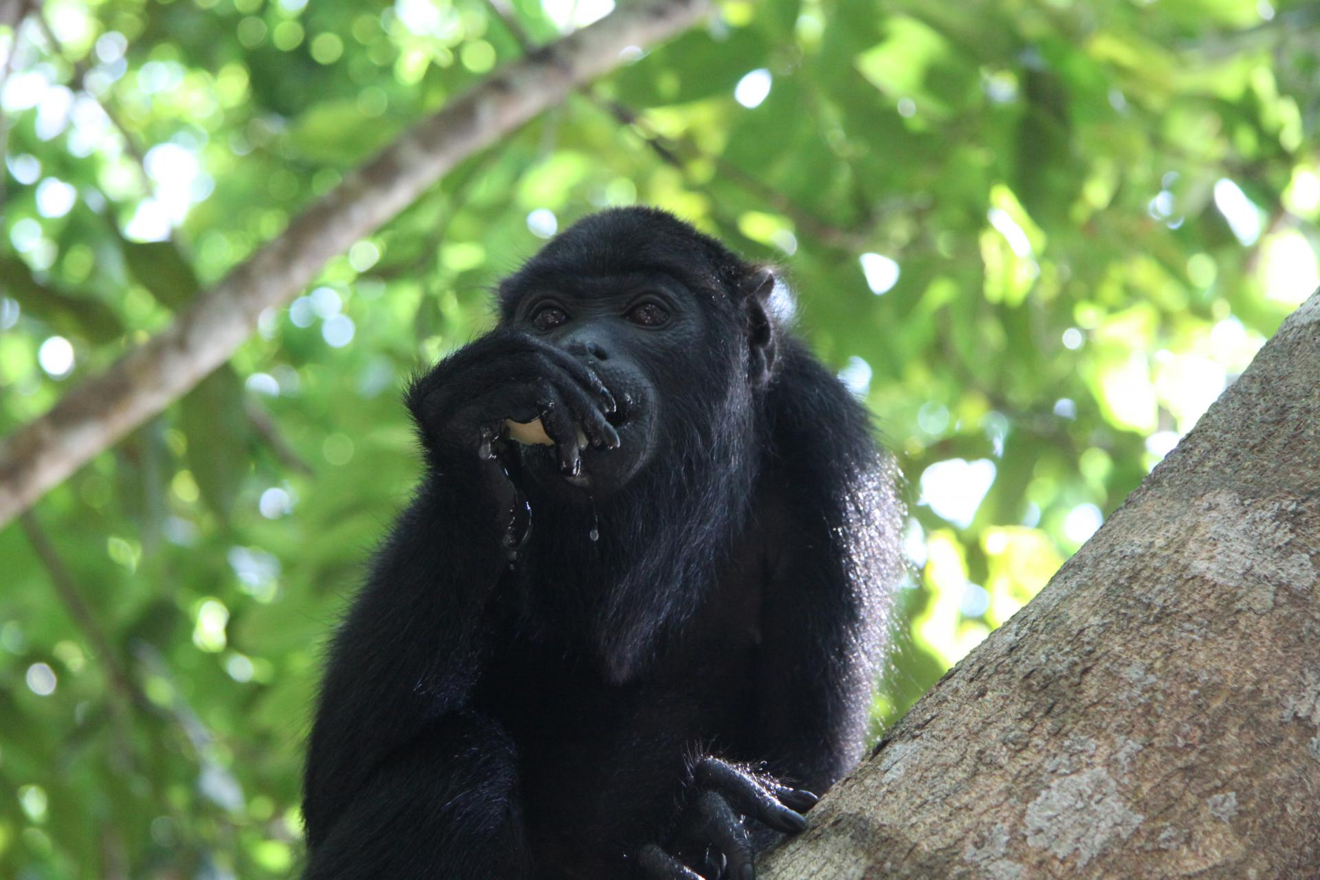 12 Days Active Travel in a small group Amazon Survival Tour: black monkey