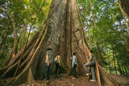 Visitors looking up to a huge tree of the Amazon region