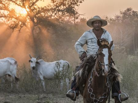 Cowboy riding in the South Pantanal