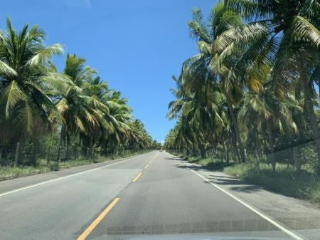 Highway lined with coconut palms in Praia Gunga