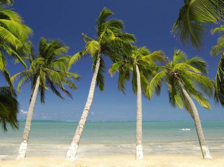 Dream beach Ponta Verde
