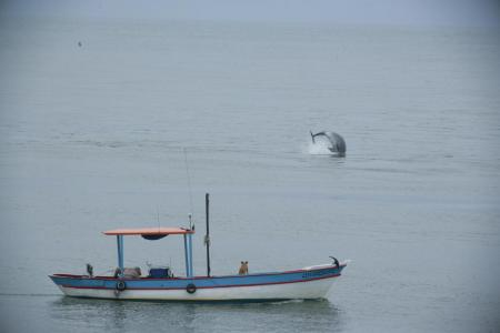Dolphin in Laguna